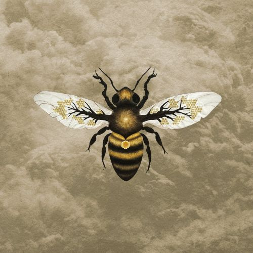 Bees Made Honey in the Vein Tree - Medicine (2017)