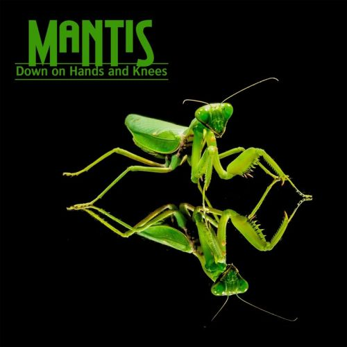 Mantis - Down On Hands And Knees (2017)