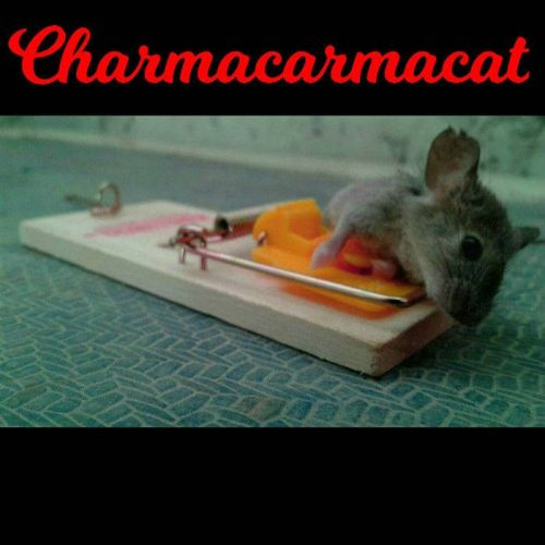 Charmacarmacat - Charmacarmacat (2017)