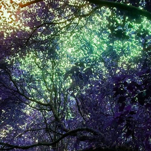 Celacanto - Luz de Negro Invierno (2021)